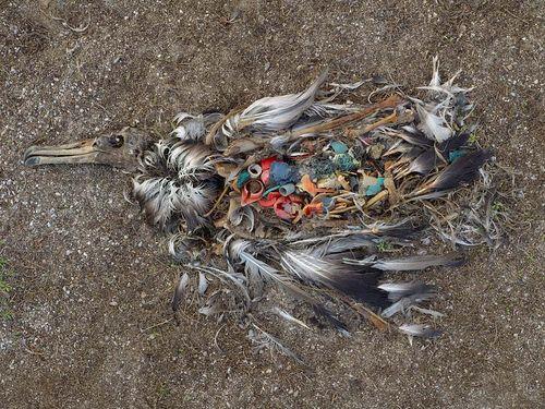 birds and plastic